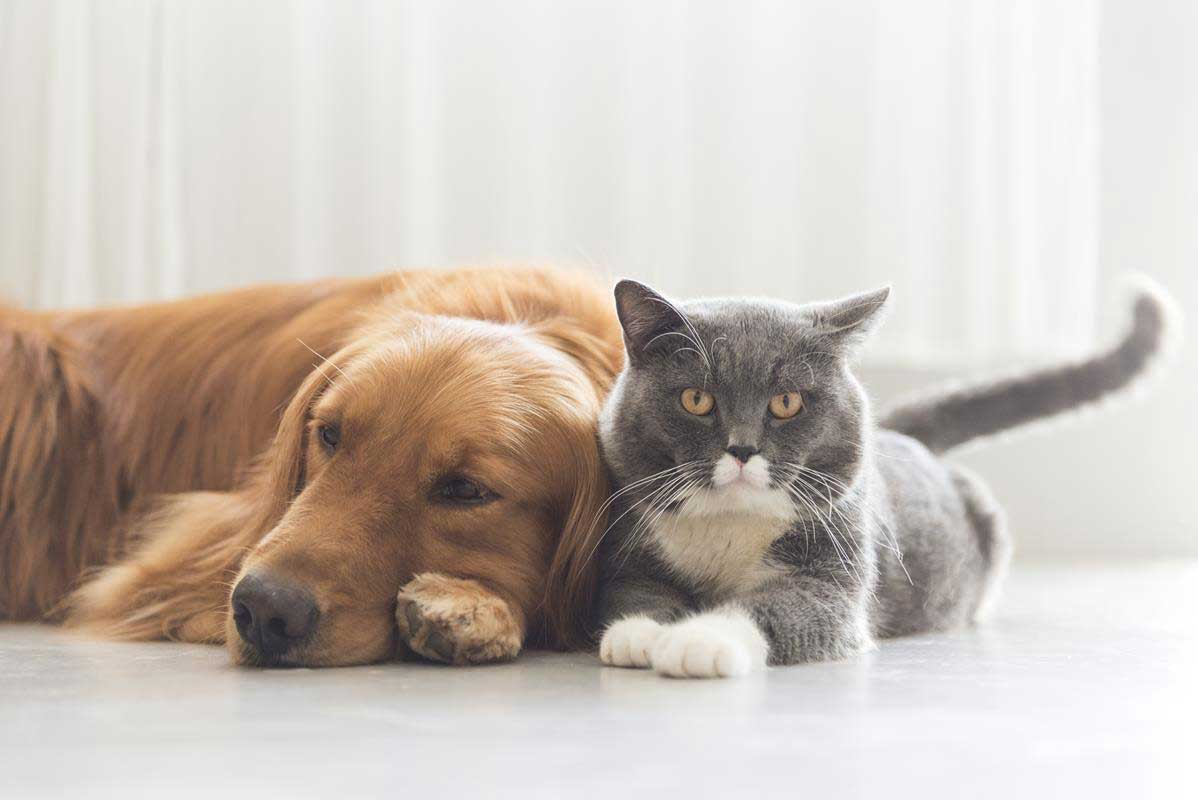 about our veterinary practice Prairieville, LA